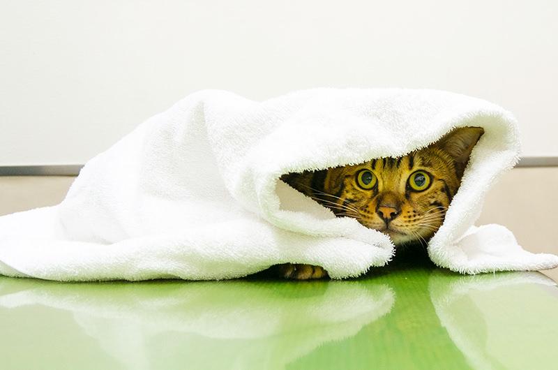 怖がりのネコちゃんには洗濯ネットがおすすめです